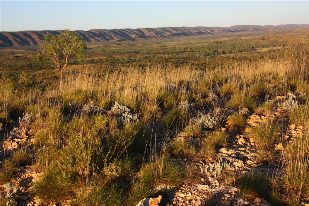 Early morning light on the Outback trail: gorgeous, but rife with the promise of scorching heat to come.
